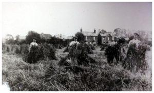 Cippenham Agriculture 1909/1910